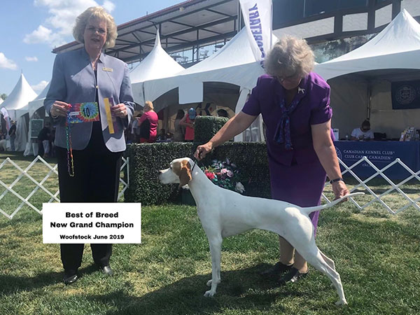 Dot - Best of Breed at Woofstock 2019